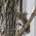 Photos: 日本栗鼠3枚の写真no3  P1010520