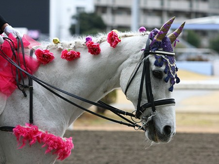川崎競馬の誘導馬01月開催 椿Ver-120124-06