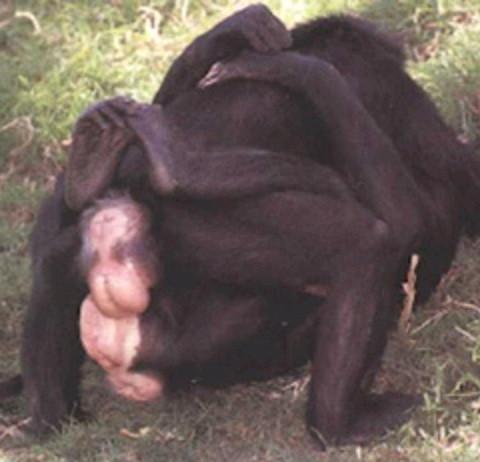 ボノボの画像 p1_18