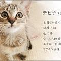 111030-チビ子ちゃん新しい家族募集ちぅ!