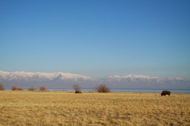 遠くに見えるWasatch Mountain