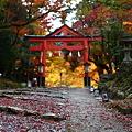 写真: 『秋の参道。。。』