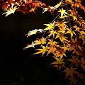 『黄金の輝き』