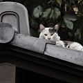 写真: 屋根の上の猫