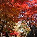Photos: 盛岡城跡公園(岩手公園)にて・3