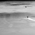 写真: 的矢湾