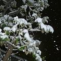 Photos: 凄い雪・・