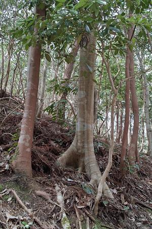 trees03162012dp2-05