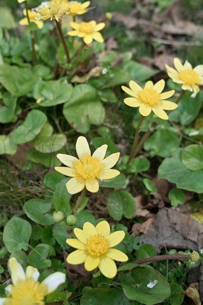 Photos: flower03302012dp2-01