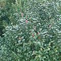 Photos: flower04022012dp2