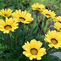 Photos: flower06112011dp2-06