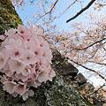 Photos: 大和郡山城