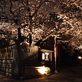 写真: 本誓寺の夜桜 01