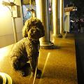 Photos: 淮海路で座るMOMOさん