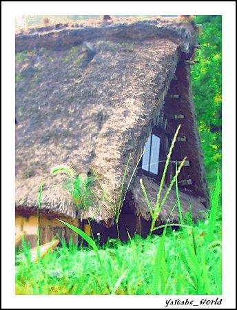 ねこじゃらしと茅葺屋根