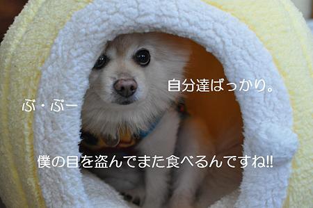 DSC_0009111