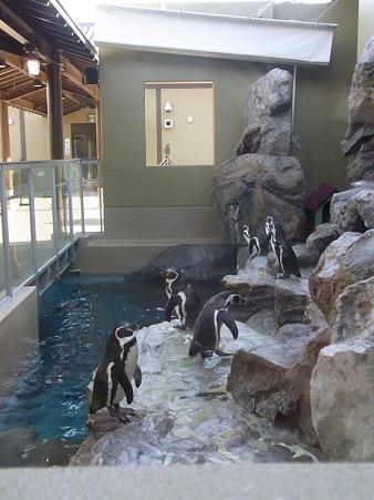 20120104 宮島 まったりペンギンプール01