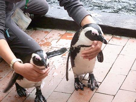 20120331 掛川 ペンギンランチ01