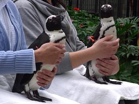 20120331 掛川 ペンギンと記念撮影05