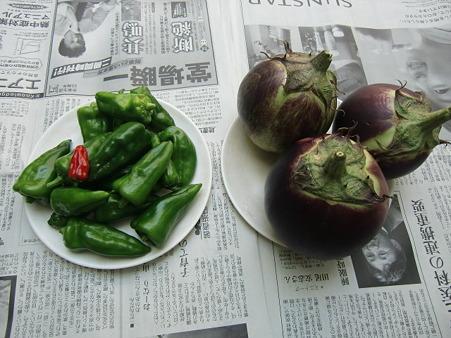 収穫10個目の賀茂ナス