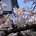 Photos: 2012 桜(3)
