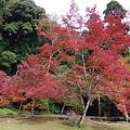 Photos: 正暦寺の紅葉
