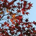 源氏山公園の紅葉その4
