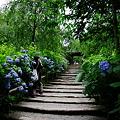 明月院・山門への階段
