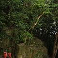 写真: 立磐神社