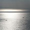 きらめく駿河湾