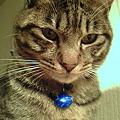 うつむき猫