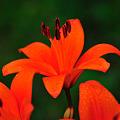 Photos: 鮮やかな色あいに咲く^^