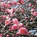 Photos: 梅の香り
