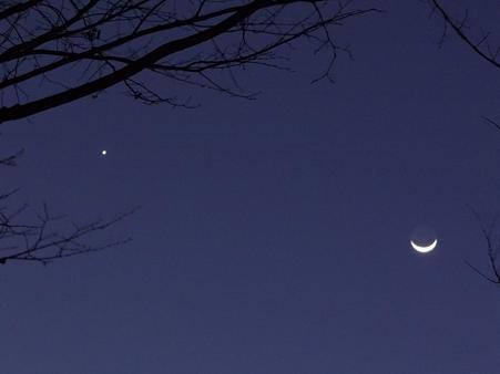 木陰からの金星と月