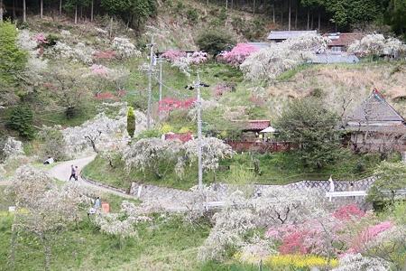 桃源郷の春