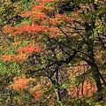 大深沢の紅葉