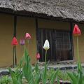 Photos: ふるさとの春
