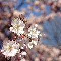 Photos: ロンドンの春(お散歩写真)