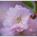 Photos: Soft Pink 4-17-12