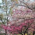 Photos: 2009_0329_111636AA