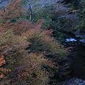 Photos: 清滝川の紅葉