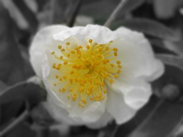 花の匂いに導かれて‥。