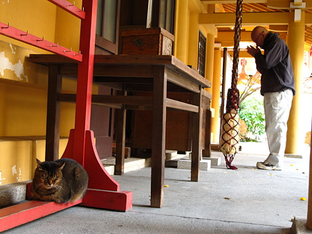 小梳(おぐし)神社の猫1