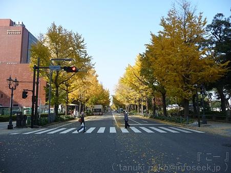111130-横浜 紅葉  山下公園通り (15)