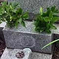 春のお彼岸の墓参り