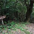写真: 20110716_165943_raw