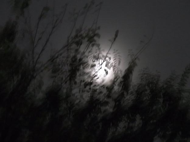 おぼろむ月