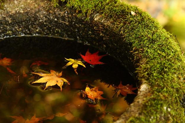Little Autumn
