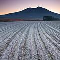 Photos: 寒さに耐える小麦芽