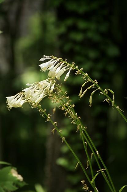 Photos: 雑木林の中で4